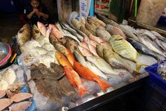 Fresh fish on asian seafood market. Pattaya City, Thailand - Mart 20, 2018: many kind of fresh raw fish on ice for sale on the counter of the Asian fish market Stock Images