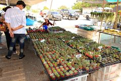 Small cactus for sale in a Thailand market. stock photography