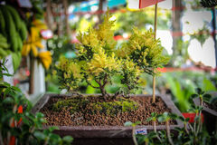 Pattaya miasto Zdjęcie Royalty Free