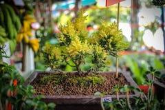 Pattaya-Stadt Lizenzfreies Stockfoto