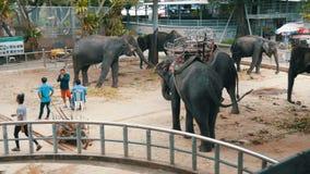 Pattaya, Tailândia - 30 de dezembro de 2017: Muitos elefantes indianos diferentes andam em torno de Valery na exploração agrícola filme