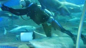 Pattaya, Tailândia - 23 de janeiro de 2018: O mergulhador de mergulhador alimenta tubarões e outros grandes peixes no aquário com filme