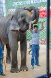 Pattaya, Tailândia: Uma mostra do elefante da presa do cair do homem. Foto de Stock