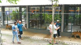PATTAYA, TAILANDIA - 29 DE DICIEMBRE DE 2017: Tiger Zoo Paseo de los tigres detrás de una cerca Los turistas y los trabajadores d almacen de video