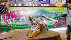 Pattaya, Tailandia:  Demostración del tigre. Fotos de archivo libres de regalías