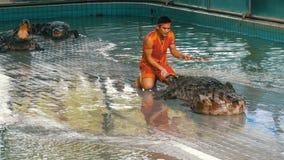 Pattaya, Tailandia - 30 dicembre 2017: L'istruttore animale fa una manifestazione con i coccodrilli Azienda agricola Pattaya, Tai archivi video