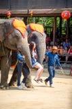 Pattaya, Tailandia: La demostración famosa del elefante. Foto de archivo libre de regalías