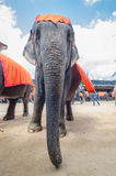 Pattaya, Tajlandia:  Słonia przedstawienie. zdjęcie stock