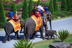 Pattaya, Thaïlande : Conduites d'éléphant de Nong Nooch image stock