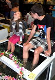 Pattaya, Thailand: Children Getting Fish Massage Stock Photography