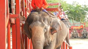 PATTAYA, THAILAND - DECEMBER 26, 2017: Elephants in elephant village. The elephants on which the tourists ride stock video