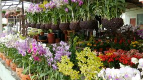 Pattaya, Thailand - December 16, 2017: Various beautiful flowers in pots in botanical garden or on a store shelves. Pattaya, Thailand - December 16, 2017 stock footage