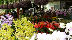 Pattaya, Thailand - December 16, 2017: Various beautiful flowers in pots in botanical garden or on a store shelves. Pattaya, Thailand - December 16, 2017 stock video footage
