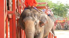 PATTAYA, THAILAND - 26. DEZEMBER 2017: Elefanten im Elefantdorf Die Elefanten, auf die die Touristen fahren stock video