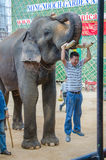 Pattaya, Thailand: Een mens hangt slagtandolifant toont. Stock Foto