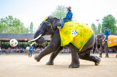 Pattaya Thailand:  Elefant som spelar fotbollshow. Royaltyfri Foto