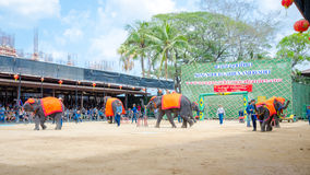 Pattaya, Thailand :  Elephant dance hula hoop show. Royalty Free Stock Photo