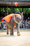 Pattaya, Thailand :  Elephant dance hula hoop show. Stock Photo