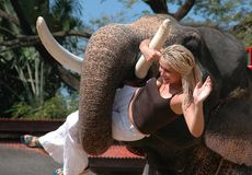 Pattaya, Thailand: Elephant Holding Woman Stock Photography