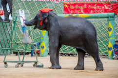 Pattaya, Thailand :  Elephant painting show. Royalty Free Stock Image