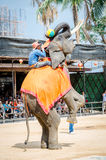 Pattaya, Thailand : Elephant playing Basketball show. stock photography