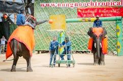Pattaya, Thailand :  Elephant playing Basketball show. Stock Photos