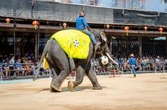 Pattaya, Thailand : Elephant playing football sho royalty free stock image
