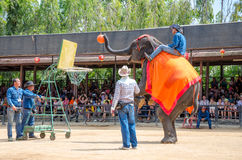 Pattaya, Thailand : Elephant shoot Basketball show. royalty free stock photography