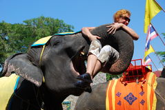 Pattaya, Thailand: Elephant Show Stock Images