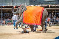 Pattaya, Thailand :  Elephant show. Stock Photography