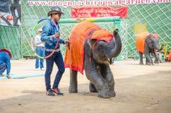 Pattaya, Thailand :  Elephant show. Stock Photos