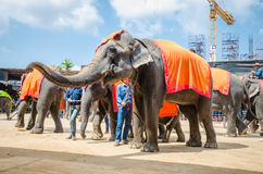 Pattaya, Thailand : Elephant show. royalty free stock photos