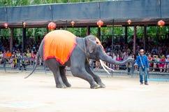 Pattaya, Thailand :  Elephant show. Royalty Free Stock Image