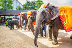 Pattaya, Thailand :  Elephant show. Stock Photo