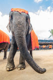 Pattaya, Thailand :  Elephant show. Royalty Free Stock Images