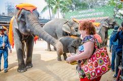 Pattaya, Thailand :  Elephant show. Stock Images