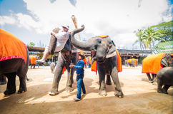 Pattaya, Thailand : The famous elephant show. Stock Photography