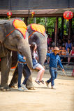 Pattaya, Thailand : The famous elephant show. Royalty Free Stock Photo