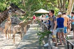Khao Kheow Open Zoo in Pattaya stock photos