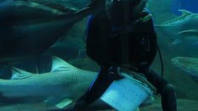 Pattaya, Thailand - Januari 23, 2018: De scuba-duiker voedt haaien en andere grote vissen in het aquarium met transparant stock footage
