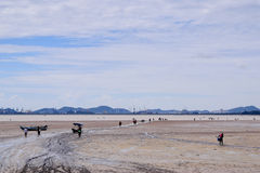 PATTAYA, THAILAND - JUNE 18: The villagers collect  shells ('hoy'), octopus ('waai') and small fish for sale, during low tide at t Royalty Free Stock Images