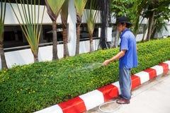 PATTAYA, THAILAND - 22. MÄRZ 2016: Thailändischer asiatischer Manngärtner, der eine grüne Hecke wässert Rote und weiße Markierung Stockbild