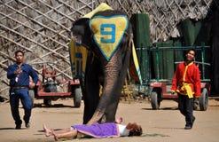 Pattaya, Thailand: Nong Nooch Elefant-Erscheinen stockbilder