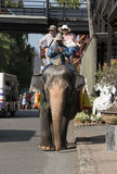 Pattaya Thailand Sunday- ‎December ‎13, ‎2015, tourist couple on elephant ride at Suan Nong Nuch. Stock Images