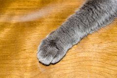 Patte de chats Photo stock
