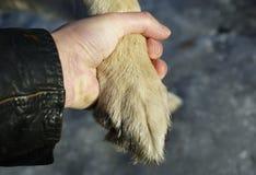 Patte de chien et main de mâle Photos libres de droits