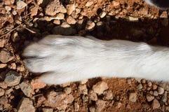 Patte de chien sur la campagne Photos libres de droits