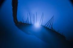 Patte de mouche sous le microscope Photographie stock