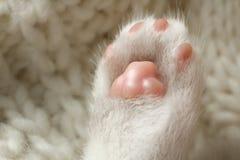 patte du ` s de chat Photo libre de droits