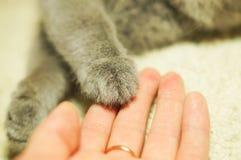 Patte du ` s de chat dans la paume d'une femme Photo stock